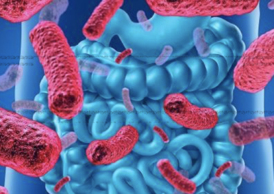 N°23 – Microbiote